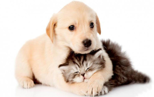 Guide to buying pet insurance in Singapore